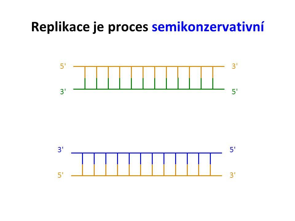 Replikace je proces semikonzervativní 5 3 5 3 5 3 5