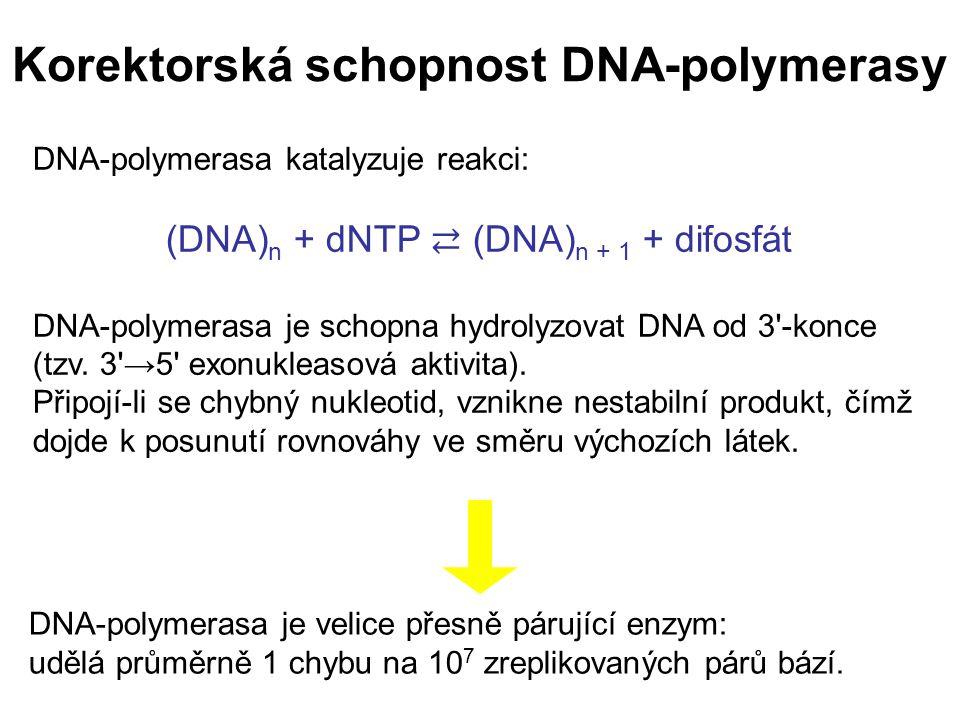 Korektorská schopnost DNA-polymerasy DNA-polymerasa katalyzuje reakci: (DNA) n + dNTP ⇄ (DNA) n + 1 + difosfát DNA-polymerasa je schopna hydrolyzovat DNA od 3 -konce (tzv.
