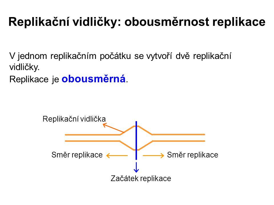 V jednom replikačním počátku se vytvoří dvě replikační vidličky.