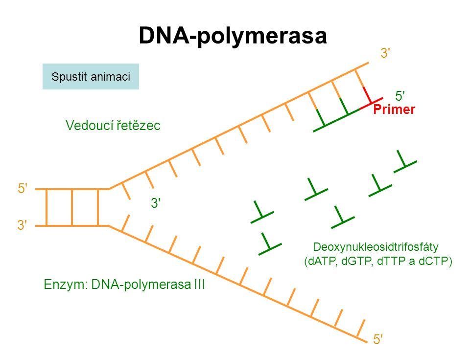 DNA-polymerasa 3 Enzym: DNA-polymerasa III Spustit animaci Deoxynukleosidtrifosfáty (dATP, dGTP, dTTP a dCTP) 5 Vedoucí řetězec 5 3 5 Primer