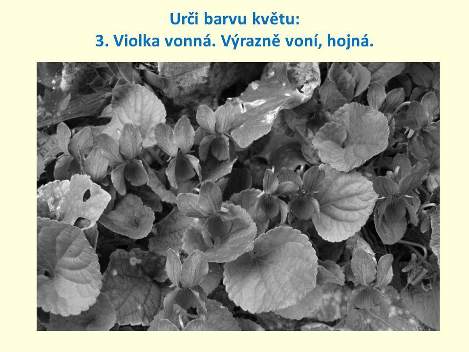 Urči barvu květenství: 4. Podběl lékařský. Léčivý, kvete v březnu.
