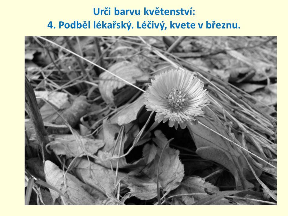 Urči barvu květu: 5. Hluchavka nachová. Hojná, mnohdy plevel.