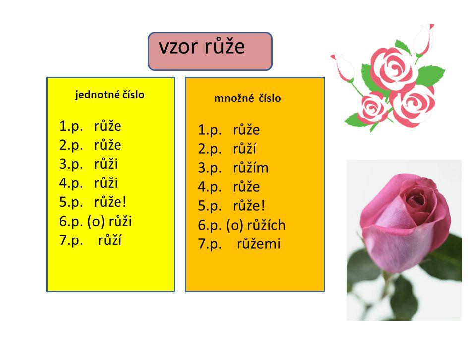 vzor růže jednotné číslo 1.p. růže 2.p. růže 3.p. růži 4.p. růži 5.p. růže! 6.p. (o) růži 7.p. růží množné číslo 1.p. růže 2.p. růží 3.p. růžím 4.p. r