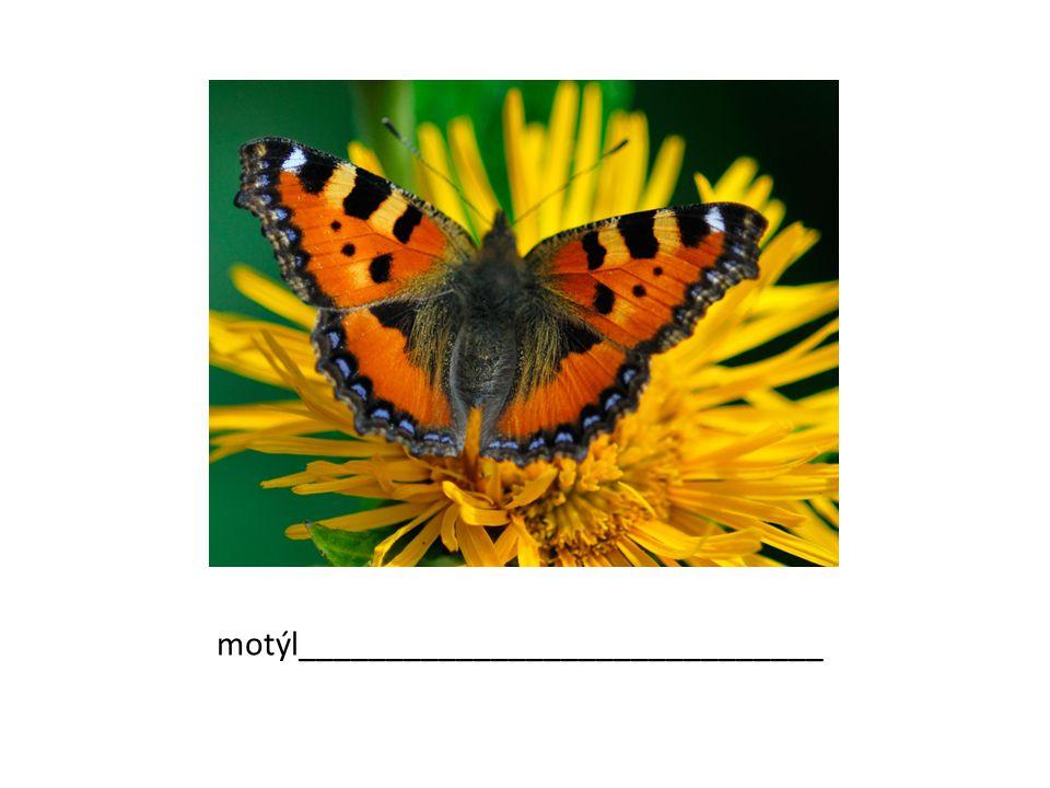 motýl______________________________