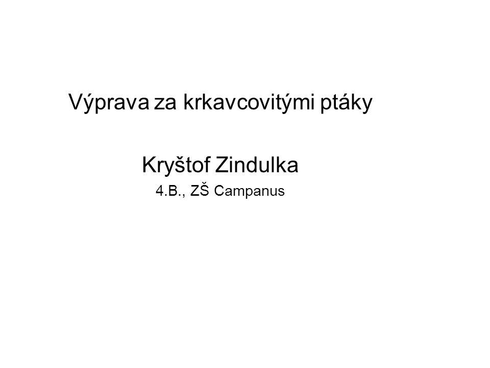 Výprava za krkavcovitými ptáky Kryštof Zindulka 4.B., ZŠ Campanus