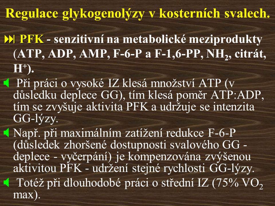 Regulace glykogenolýzy v kosterních svalech.  PFK -  PFK - senzitivní na metabolické meziprodukty (ATP, ADP, AMP, F-6-P a F-1,6-PP, NH 2, citrát, H
