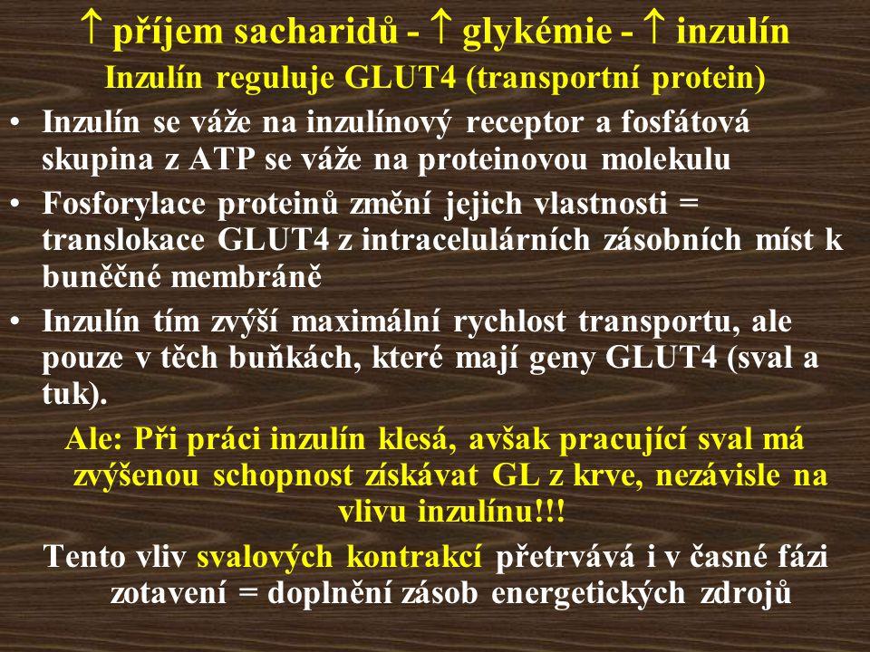  příjem sacharidů -  glykémie -  inzulín Inzulín reguluje GLUT4 (transportní protein) Inzulín se váže na inzulínový receptor a fosfátová skupina z