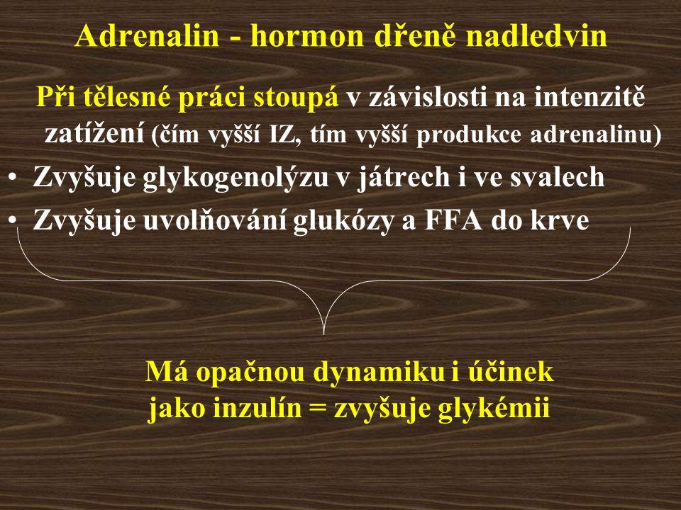 Adrenalin - hormon dřeně nadledvin Při tělesné práci stoupá v závislosti na intenzitě zatížení (čím vyšší IZ, tím vyšší produkce adrenalinu) Zvyšuje g