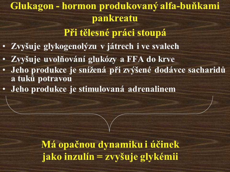 Glukagon - hormon produkovaný alfa-buňkami pankreatu Při tělesné práci stoupá Zvyšuje glykogenolýzu v játrech i ve svalech Zvyšuje uvolňování glukózy