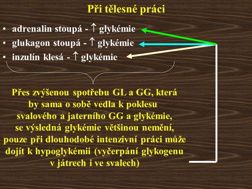 Při tělesné práci adrenalin stoupá -  glykémie glukagon stoupá -  glykémie inzulín klesá -  glykémie Přes zvýšenou spotřebu GL a GG, která by sama