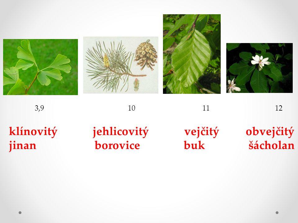 klínovitý jehlicovitý vejčitý obvejčitý jinan borovice buk šácholan 3,9 10 11 12