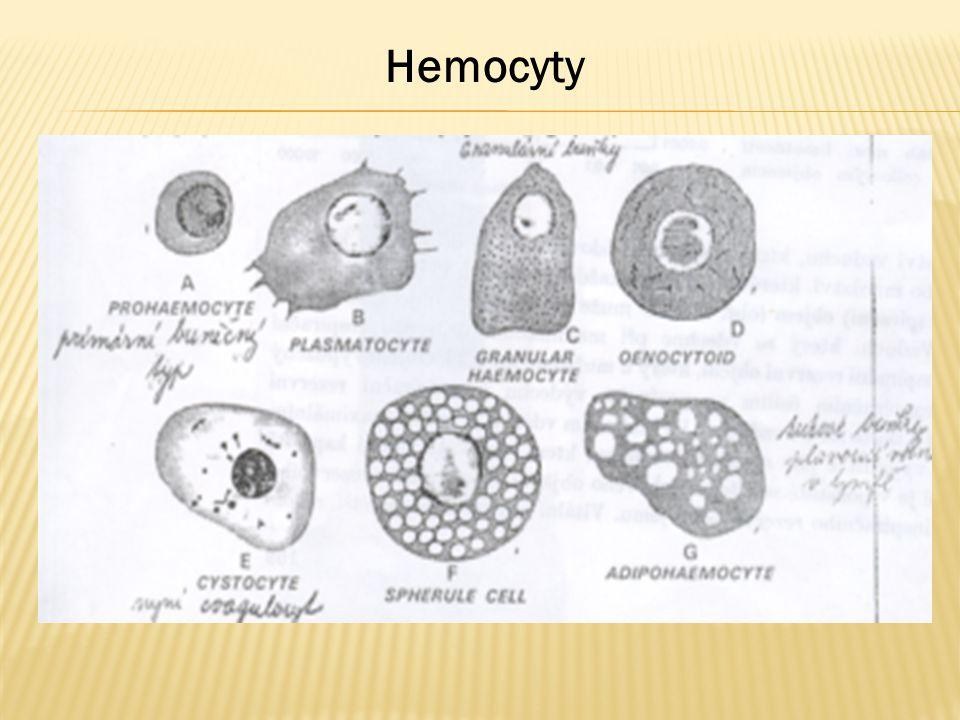  Materiál: Larvy Bource nebo Zavíječe (na každého posluchače 1 kus), roztok suspenze inertních částic MSHP, fenylthiomočovina, injekční stříkačka - mikrotubulinka, nůžky, podložní sklíčka, barvící roztoky, eppendorfky, špičky, nastavitelné mikropipety  Postup:  1.Ustřihneme 1 nožku larvy a vytékající hemolymfu zachytíme kapkou na sklíčko a kapku rozetřeme a sklíčko s nátěrem zahřejeme  2.další kapku - 20 μl přeneseme do eppendorfky obsahující fenylthiomočovinu, aby se hemolymfa nesrazila, přidáme 15 μl roztoku částic MSHP a necháme kultivovat  3.po kultivaci kápneme kapku hemolymfy stejným způsobem na podložní sklíčko a rozetřeme a sklíčko s nátěrem zahřejeme  4.do další larvy injikujeme 15 μl roztoku inertních částic, larvy necháme v teple 30 min kultivovat  5.po kultivaci částic MSHP v larvě ustřihneme 1 nožku larvy a vytékající hemolymfu zachytíme kapkou na sklíčko a kapku rozetřeme a sklíčko s nátěrem zahřejeme  6.roztěry barvíme podle Pappenheima.