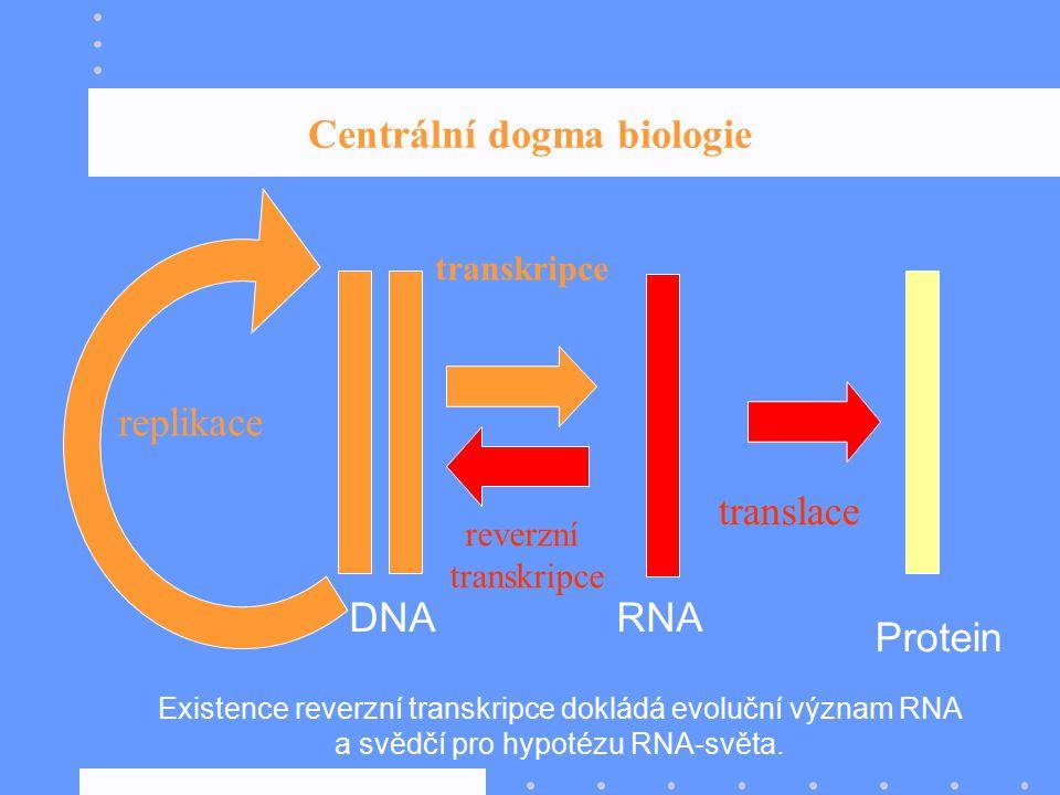 Centrální dogma biologie Protein RNADNA Existence reverzní transkripce dokládá evoluční význam RNA a svědčí pro hypotézu RNA-světa. transkripce reverz
