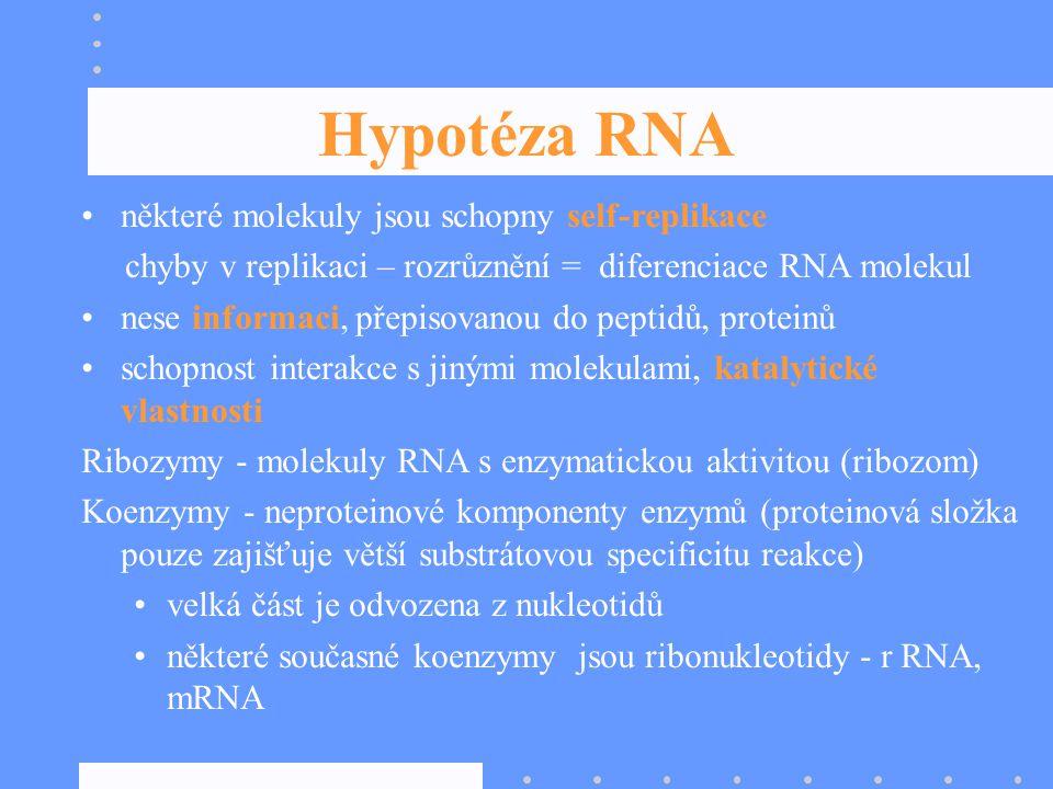 Hypotéza RNA některé molekuly jsou schopny self-replikace chyby v replikaci – rozrůznění = diferenciace RNA molekul nese informaci, přepisovanou do pe
