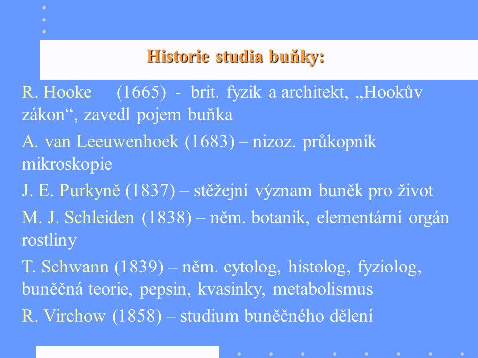 """Historie studia buňky: R. Hooke (1665) - brit. fyzik a architekt, """"Hookův zákon"""", zavedl pojem buňka A. van Leeuwenhoek (1683) – nizoz. průkopník mikr"""