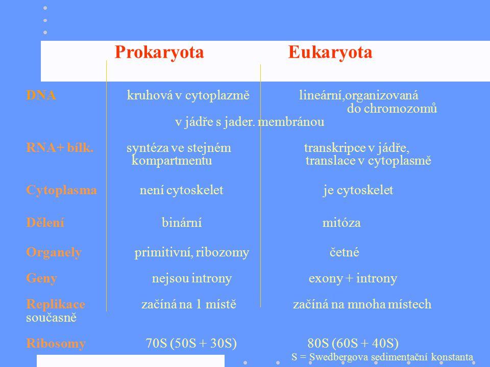 Prokaryota Eukaryota DNA kruhová v cytoplazmě lineární,organizovaná do chromozomů v jádře s jader. membránou RNA+ bílk. syntéza ve stejném transkripce