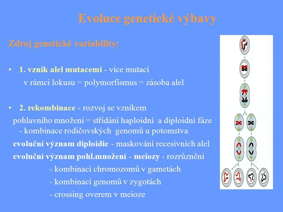 Evoluce genetické výbavy Zdroj genetické variability: 1. vznik alel mutacemi - více mutací v rámci lokusu = polymorfismus = zásoba alel 2. rekombinace