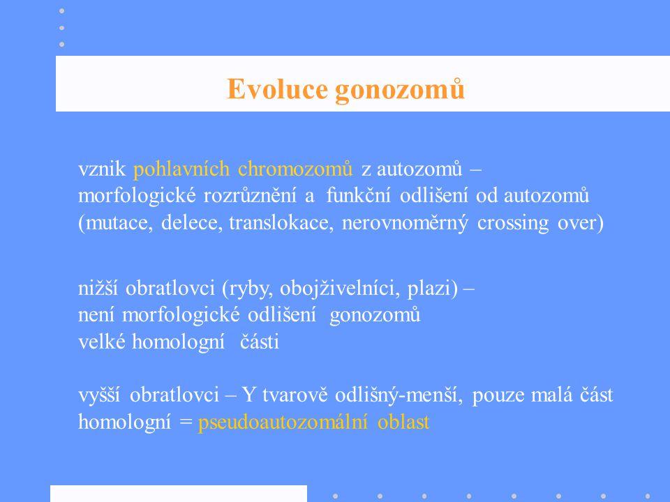 vznik pohlavních chromozomů z autozomů – morfologické rozrůznění a funkční odlišení od autozomů (mutace, delece, translokace, nerovnoměrný crossing ov