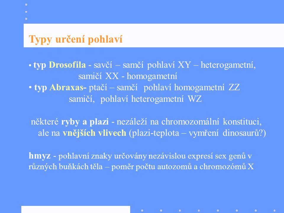 Typy určení pohlaví : typ Drosofila - savčí – samčí pohlaví XY – heterogametní, samičí XX - homogametní typ Abraxas- ptačí – samčí pohlaví homogametní