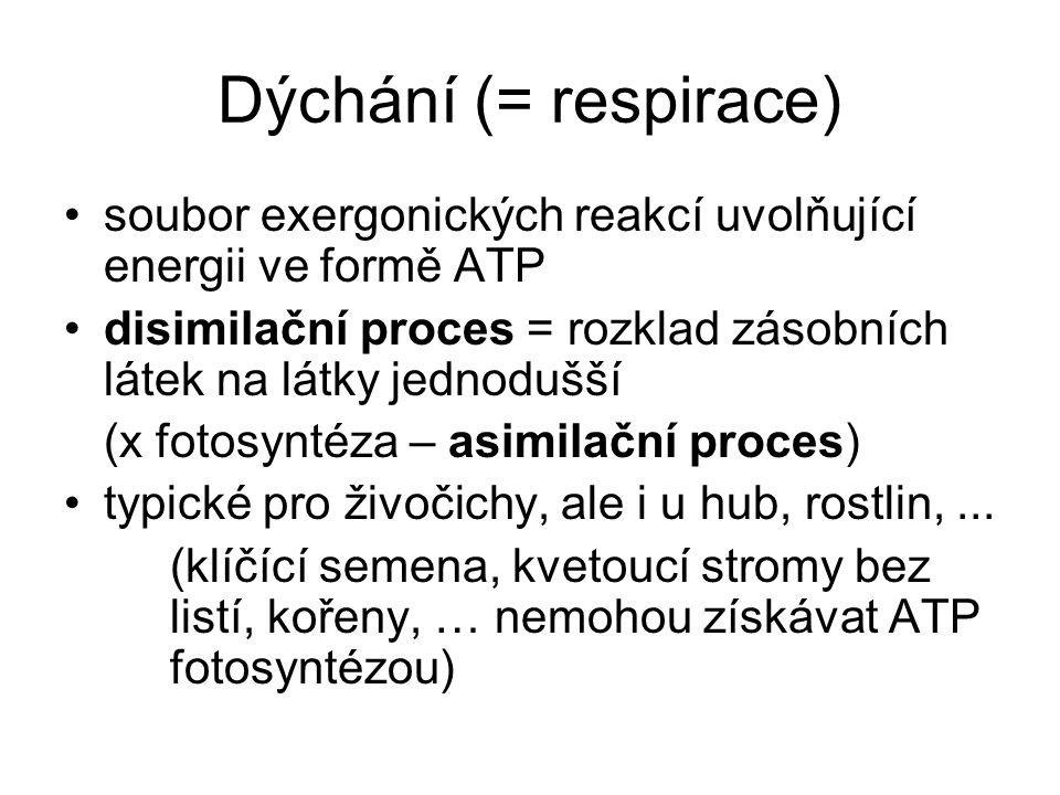Dýchání (= respirace) soubor exergonických reakcí uvolňující energii ve formě ATP disimilační proces = rozklad zásobních látek na látky jednodušší (x fotosyntéza – asimilační proces) typické pro živočichy, ale i u hub, rostlin,...
