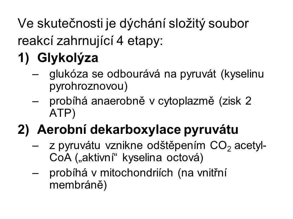 """Ve skutečnosti je dýchání složitý soubor reakcí zahrnující 4 etapy: 1)Glykolýza –glukóza se odbourává na pyruvát (kyselinu pyrohroznovou) –probíhá anaerobně v cytoplazmě (zisk 2 ATP) 2)Aerobní dekarboxylace pyruvátu –z pyruvátu vznikne odštěpením CO 2 acetyl- CoA (""""aktivní kyselina octová) –probíhá v mitochondriích (na vnitřní membráně)"""