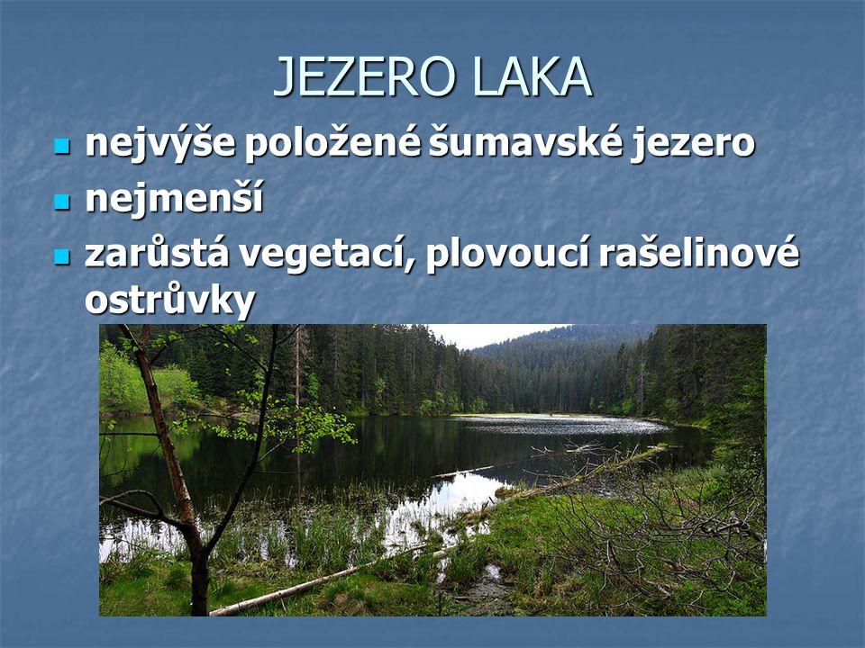 JEZERO LAKA nejvýše položené šumavské jezero nejvýše položené šumavské jezero nejmenší nejmenší zarůstá vegetací, plovoucí rašelinové ostrůvky zarůstá