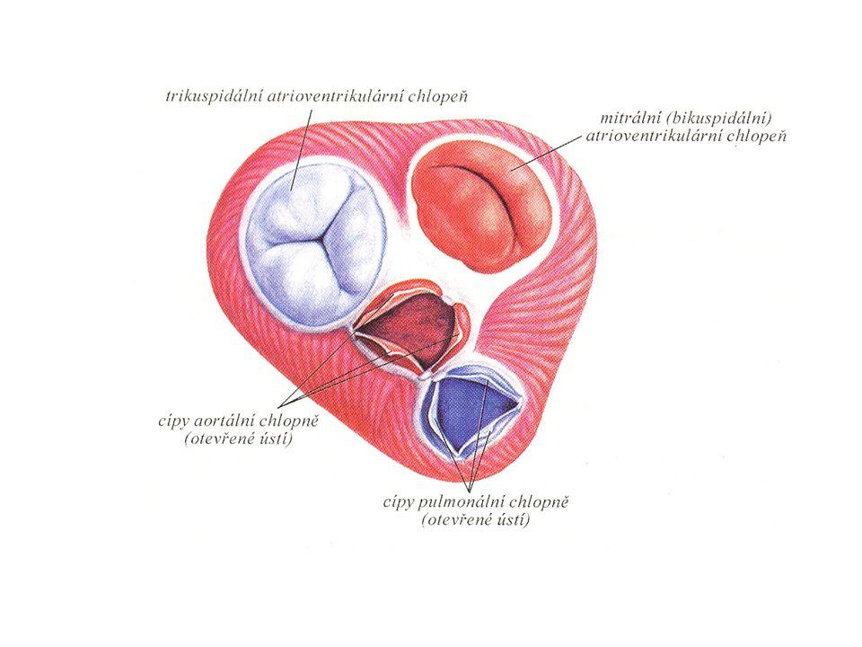 PORUCHY FUNKCE CHLOPNÍ PROPAD CHLOPNĚ = PROLAPS NEDOMYKAVOST CHLOPNĚ = INSUFICIENCE ZÚŽENÍ SRDEČNÍ CHLOPNĚ = STENÓZA zpravidla do předsíně část systolického tepového objemu je tak bez užitku pro oběh uložena v předsíni a srdce je objemově přetěžováno část krevního oběhu se vrací do prostoru s nižším tlakem při této poruše je srdce přetěžováno objemově zmenšuje se plocha pro průtok krve, což představuje vyšší odpor proudící krve a zvýšení tlakové zátěže srdce