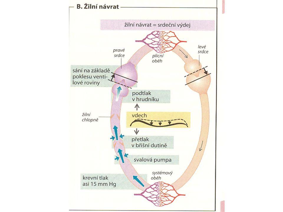 DISTRIBUCE KRVE Tepny a žíly dopravující krev do plic a z plic12% Žíly59% Tepny15% Kapiláry5% Srdce9%