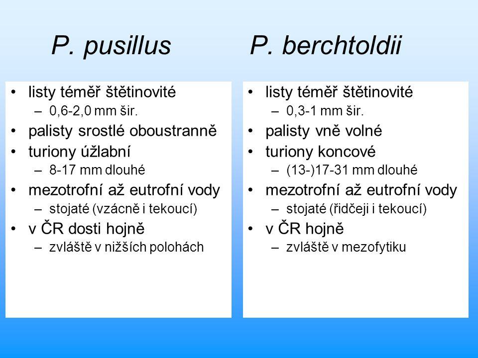 P. pusillus P. berchtoldii listy téměř štětinovité –0,6-2,0 mm šir. palisty srostlé oboustranně turiony úžlabní –8-17 mm dlouhé mezotrofní až eutrofní