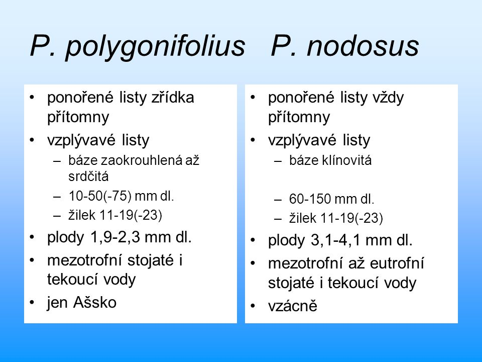 P. polygonifoliusP. nodosus ponořené listy zřídka přítomny vzplývavé listy –báze zaokrouhlená až srdčitá –10-50(-75) mm dl. –žilek 11-19(-23) plody 1,