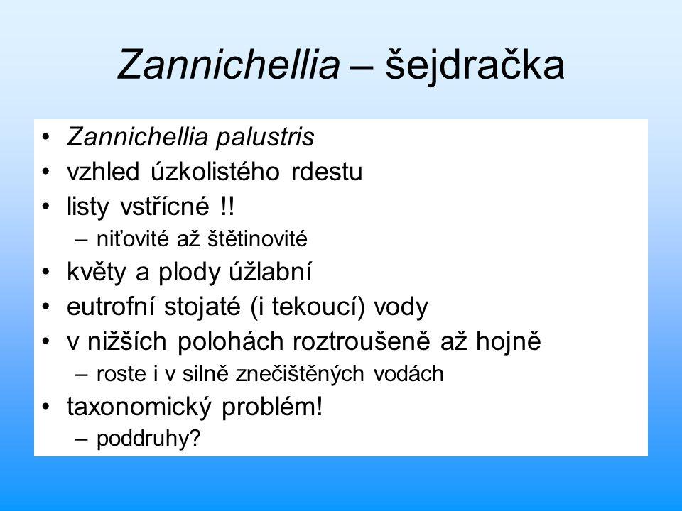 Zannichellia – šejdračka Zannichellia palustris vzhled úzkolistého rdestu listy vstřícné !! –niťovité až štětinovité květy a plody úžlabní eutrofní st