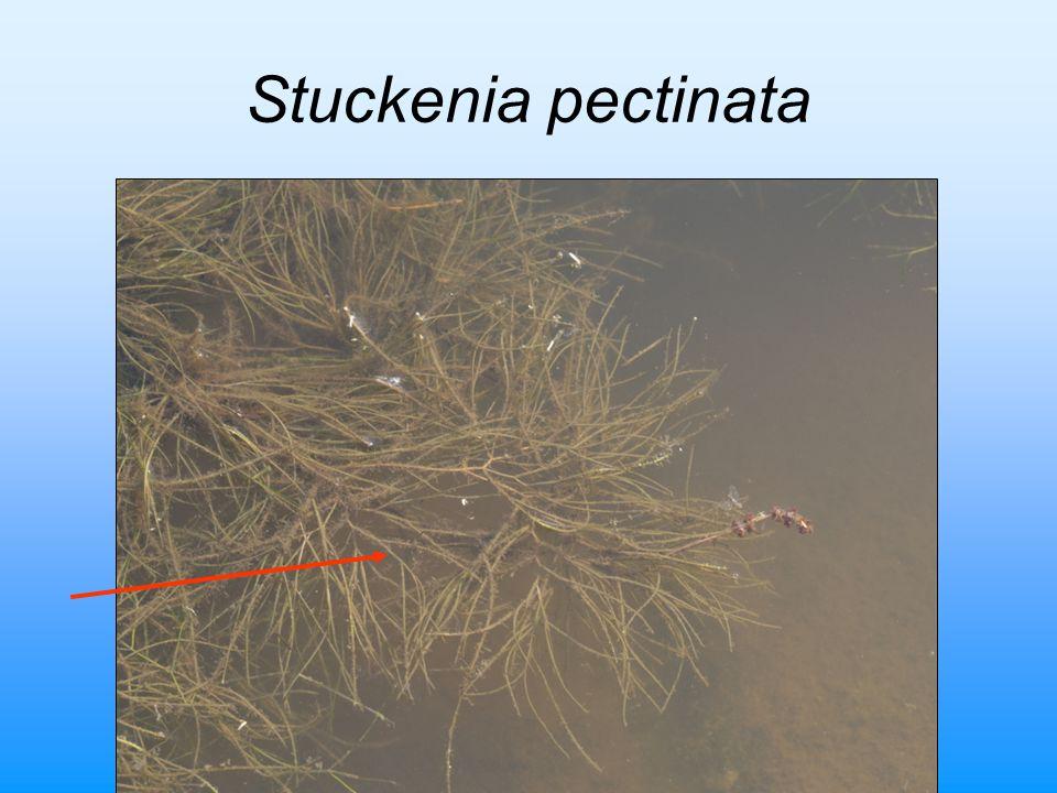 Čeřovský et al. ČK