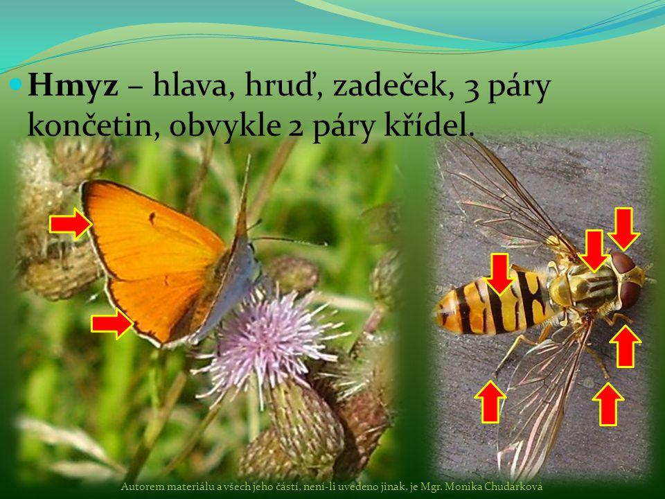 Hmyz – hlava, hruď, zadeček, 3 páry končetin, obvykle 2 páry křídel.