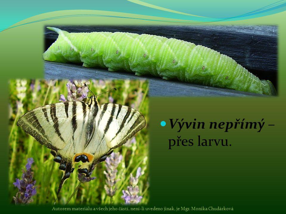 Vývin nepřímý – přes larvu. Autorem materiálu a všech jeho částí, není-li uvedeno jinak, je Mgr. Monika Chudárková