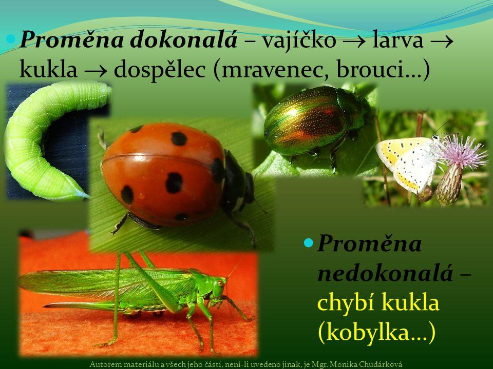 Proměna dokonalá – vajíčko  larva  kukla  dospělec (mravenec, brouci…) Proměna nedokonalá – chybí kukla (kobylka…) Autorem materiálu a všech jeho č