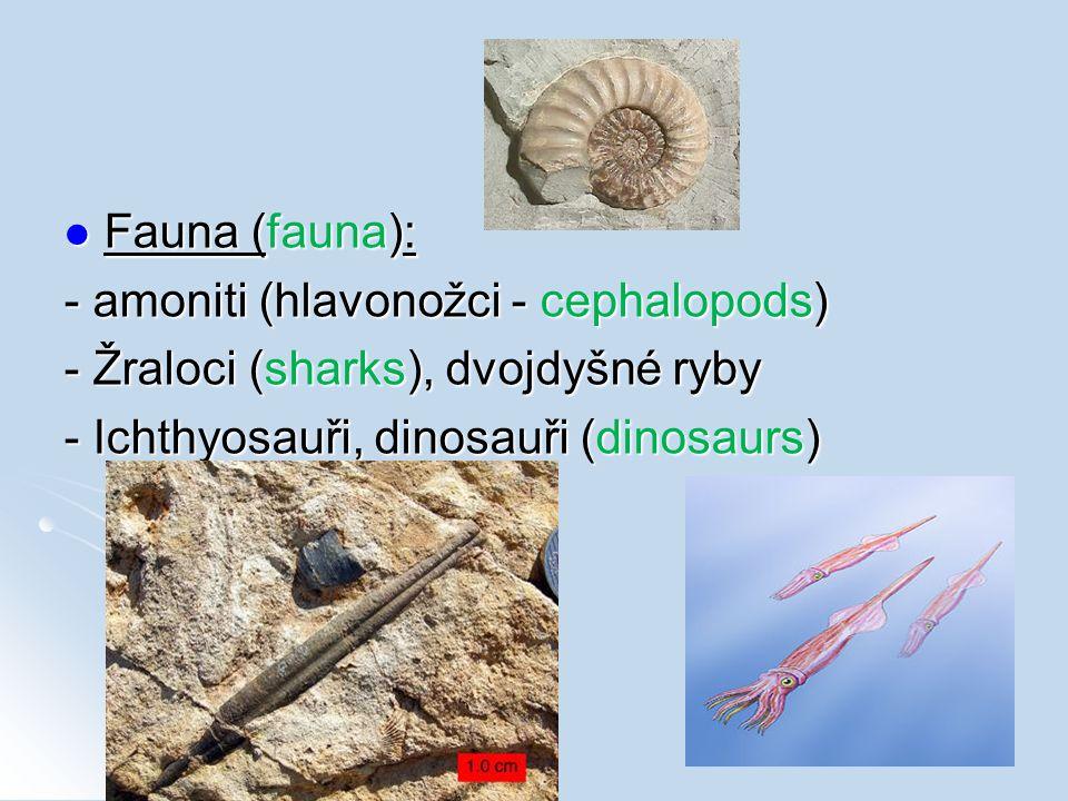 Fauna (fauna): Fauna (fauna): - amoniti (hlavonožci - cephalopods) - Žraloci (sharks), dvojdyšné ryby - Ichthyosauři, dinosauři (dinosaurs)