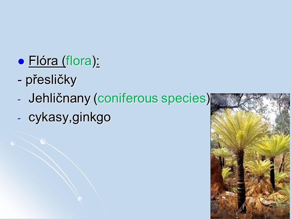 Flóra (flora): Flóra (flora): - přesličky - Jehličnany (coniferous species) - cykasy,ginkgo