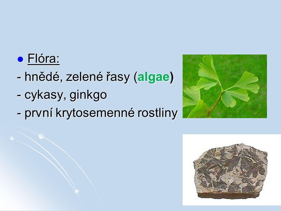 Flóra: Flóra: - hnědé, zelené řasy (algae) - cykasy, ginkgo - první krytosemenné rostliny