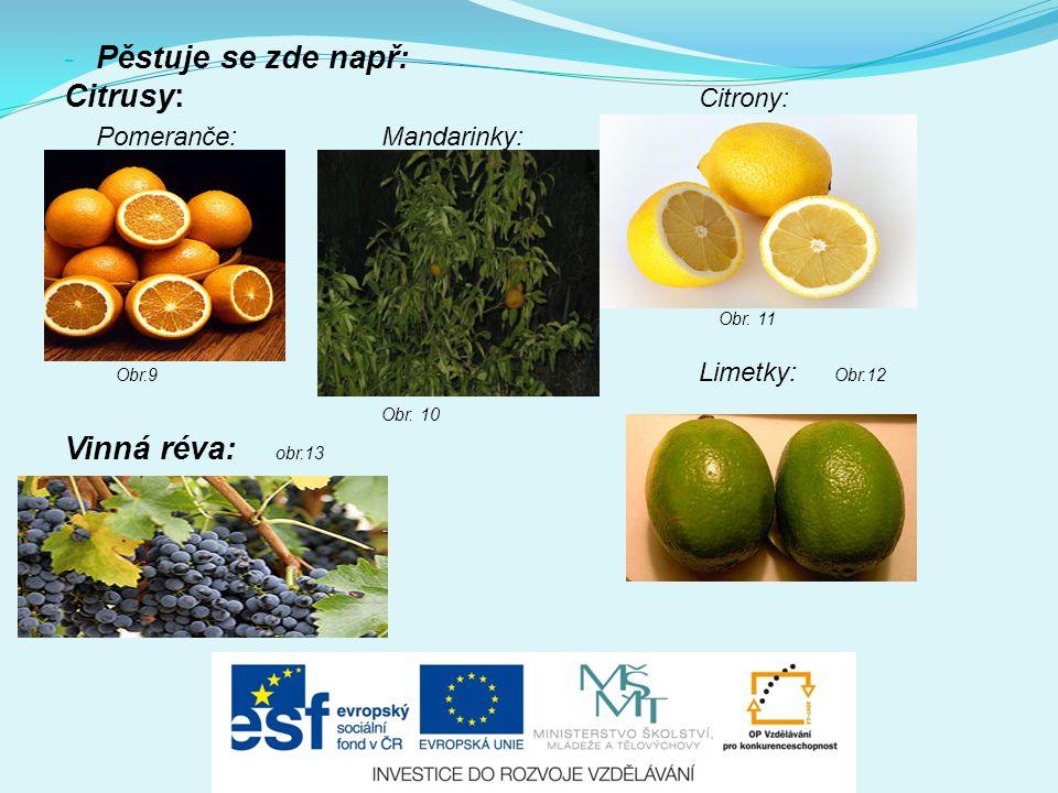 - Pěstuje se zde např: Citrusy: Citrony: Pomeranče:Mandarinky: Obr. 11 Obr.9 Limetky: Obr.12 Obr. 10 Vinná réva: obr.13 -