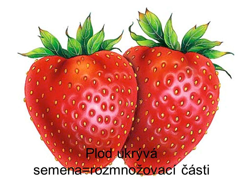 Plod ukrývá semena=rozmnožovací části