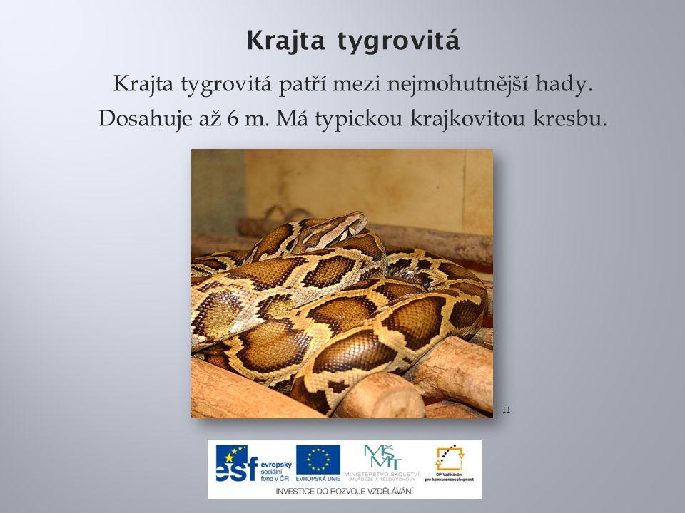 Krajta tygrovitá Krajta tygrovitá patří mezi nejmohutnější hady. Dosahuje až 6 m. Má typickou krajkovitou kresbu. 11