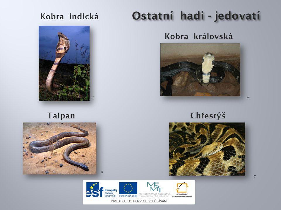 Ostatní hadi - jedovatí Ostatní hadi - jedovatí Kobra indická 56 Kobra královská 7 8 Ch ř estýš Taipan