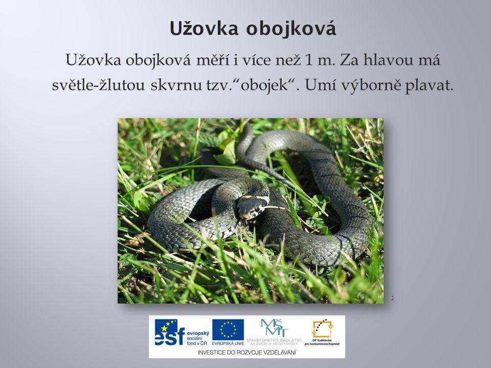 Zmije obecná Zmije obecná je náš jediný jedovatý had.