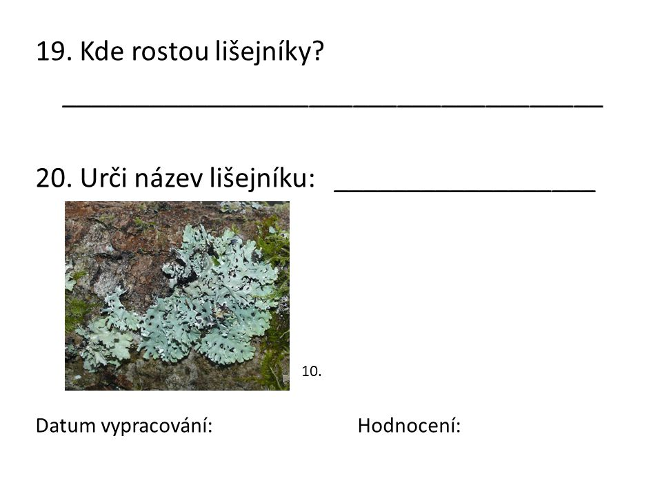Dostupný pod licencí GNU Free Documentation License na www: 1.http://commons.wikimedia.org/wiki/File:Dryopteris_filix- mas0.jpg?uselang=cshttp://commons.wikimedia.org/wiki/File:Dryopteris_filix- mas0.jpg?uselang=cs 2.http://commons.wikimedia.org/wiki/File:Boraginaceae_- _Pulmonaria_officinalis-1.JPG?uselang=cshttp://commons.wikimedia.org/wiki/File:Boraginaceae_- _Pulmonaria_officinalis-1.JPG?uselang=cs 3.http://commons.wikimedia.org/wiki/File:Hepatica_nobilis_(Pharaoh_han).j pg?uselang=cshttp://commons.wikimedia.org/wiki/File:Hepatica_nobilis_(Pharaoh_han).j pg?uselang=cs 4.http://commons.wikimedia.org/wiki/File:Illustration_Cytisus_scoparius0.jpg ?uselang=cshttp://commons.wikimedia.org/wiki/File:Illustration_Cytisus_scoparius0.jpg ?uselang=cs 5.http://commons.wikimedia.org/wiki/File:Illustration_Daphne_mezereum0.j pghttp://commons.wikimedia.org/wiki/File:Illustration_Daphne_mezereum0.j pg 6.http://upload.wikimedia.org/wikipedia/commons/1/1d/Lycopodium_clavat um_151207.jpghttp://upload.wikimedia.org/wikipedia/commons/1/1d/Lycopodium_clavat um_151207.jpg 7.