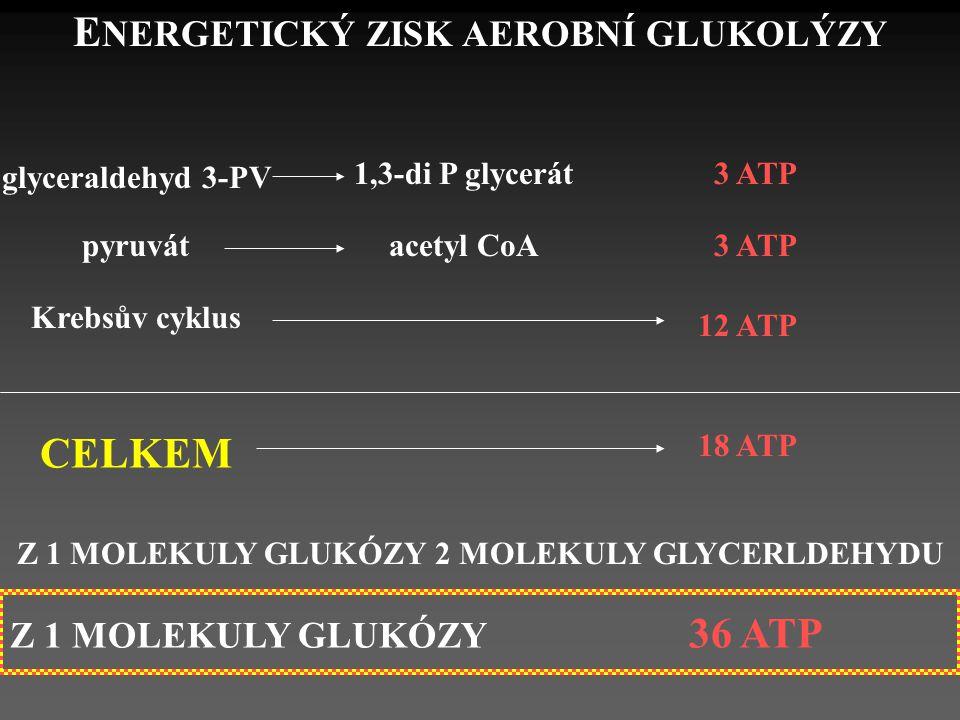 E NERGETICKÝ ZISK AEROBNÍ GLUKOLÝZY glyceraldehyd 3-PV 1,3-di P glycerát3 ATP pyruvátacetyl CoA 3 ATP Krebsův cyklus 12 ATP CELKEM 18 ATP Z 1 MOLEKULY