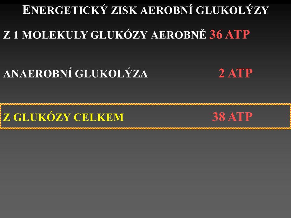 E NERGETICKÝ ZISK AEROBNÍ GLUKOLÝZY Z 1 MOLEKULY GLUKÓZY AEROBNĚ 36 ATP ANAEROBNÍ GLUKOLÝZA 2 ATP Z GLUKÓZY CELKEM 38 ATP