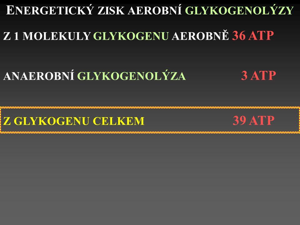 E NERGETICKÝ ZISK AEROBNÍ GLYKOGENOLÝZY Z 1 MOLEKULY GLYKOGENU AEROBNĚ 36 ATP ANAEROBNÍ GLYKOGENOLÝZA 3 ATP Z GLYKOGENU CELKEM 39 ATP