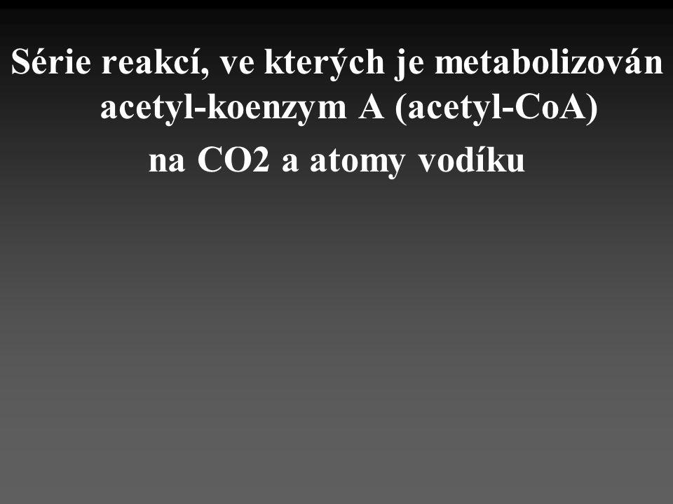 Série reakcí, ve kterých je metabolizován acetyl-koenzym A (acetyl-CoA) na CO2 a atomy vodíku