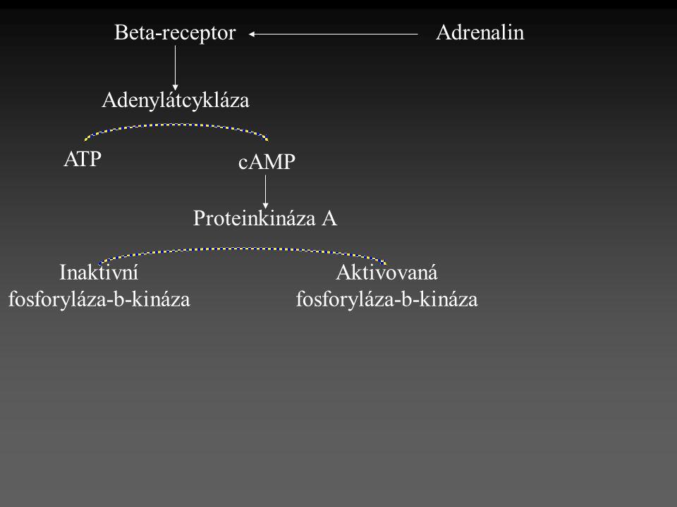 AdrenalinBeta-receptor Adenylátcykláza ATP cAMP Proteinkináza A Inaktivní fosforyláza-b-kináza Aktivovaná fosforyláza-b-kináza