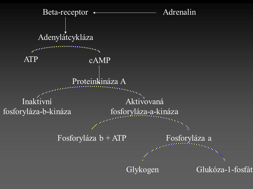 AdrenalinBeta-receptor Adenylátcykláza ATP cAMP Proteinkináza A Inaktivní fosforyláza-b-kináza Aktivovaná fosforyláza-a-kináza Fosforyláza aFosforyláz